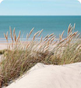 Dune et mer