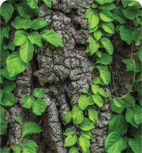 Écorse de bois et feuilles